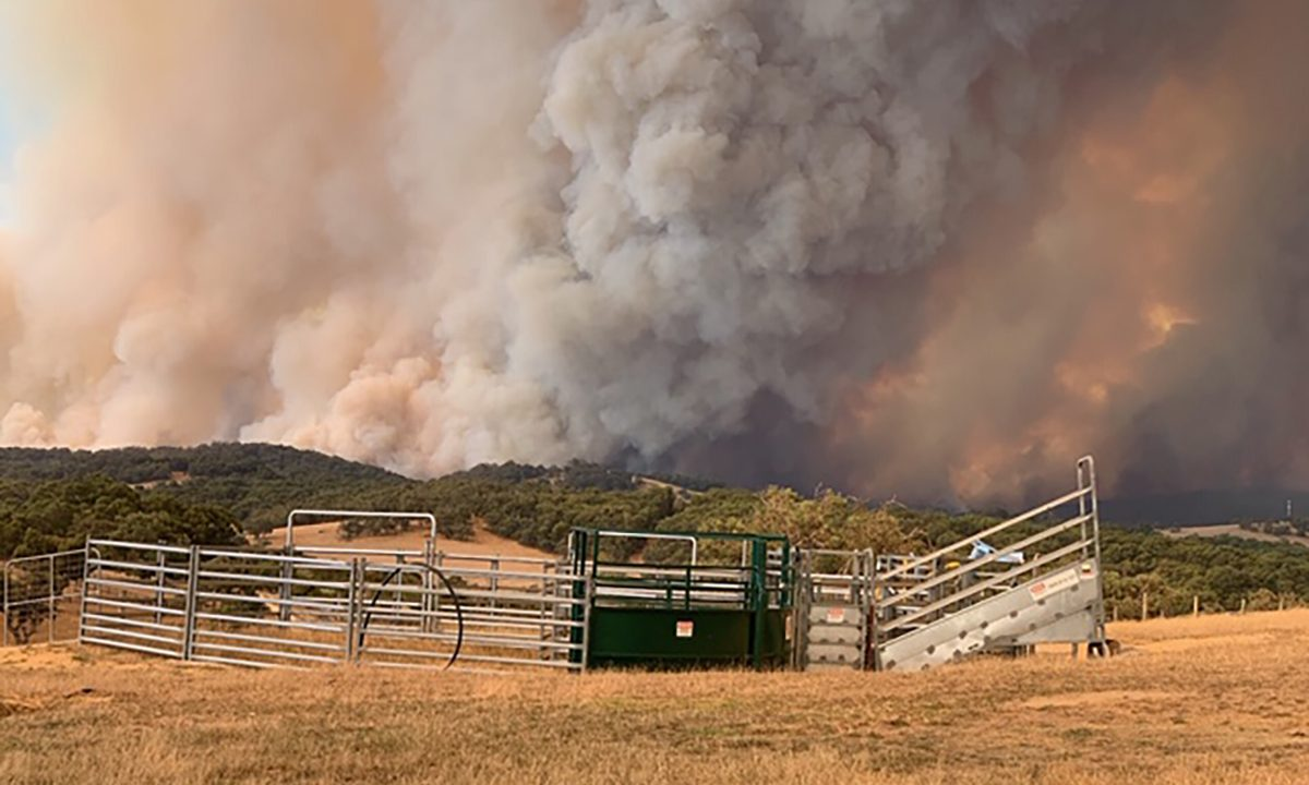 Bunyip fires 2019